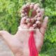 Holi Lotus 27+1 Beads Japa Mala With Red Tassel