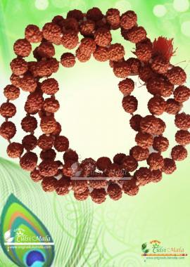 Rudraksha Mala Holy Hindu 108 + 1 Beads